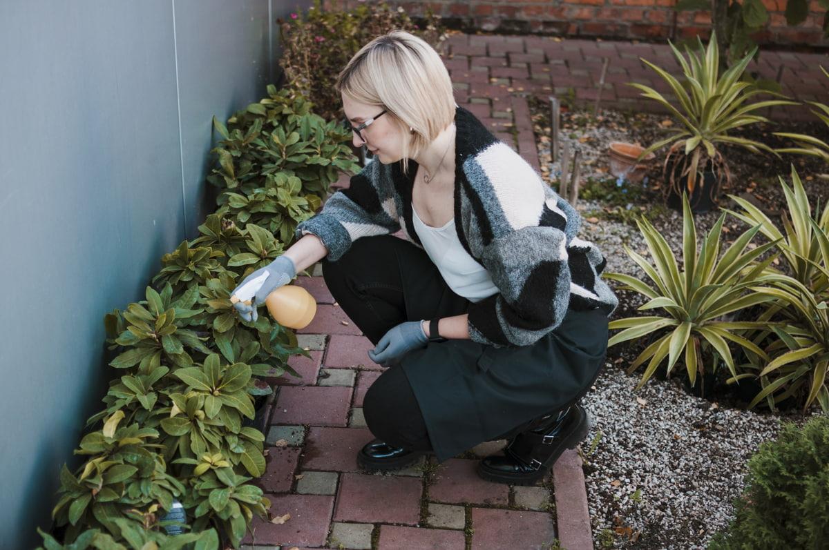 Tipos de plagas: Como erradicarlas